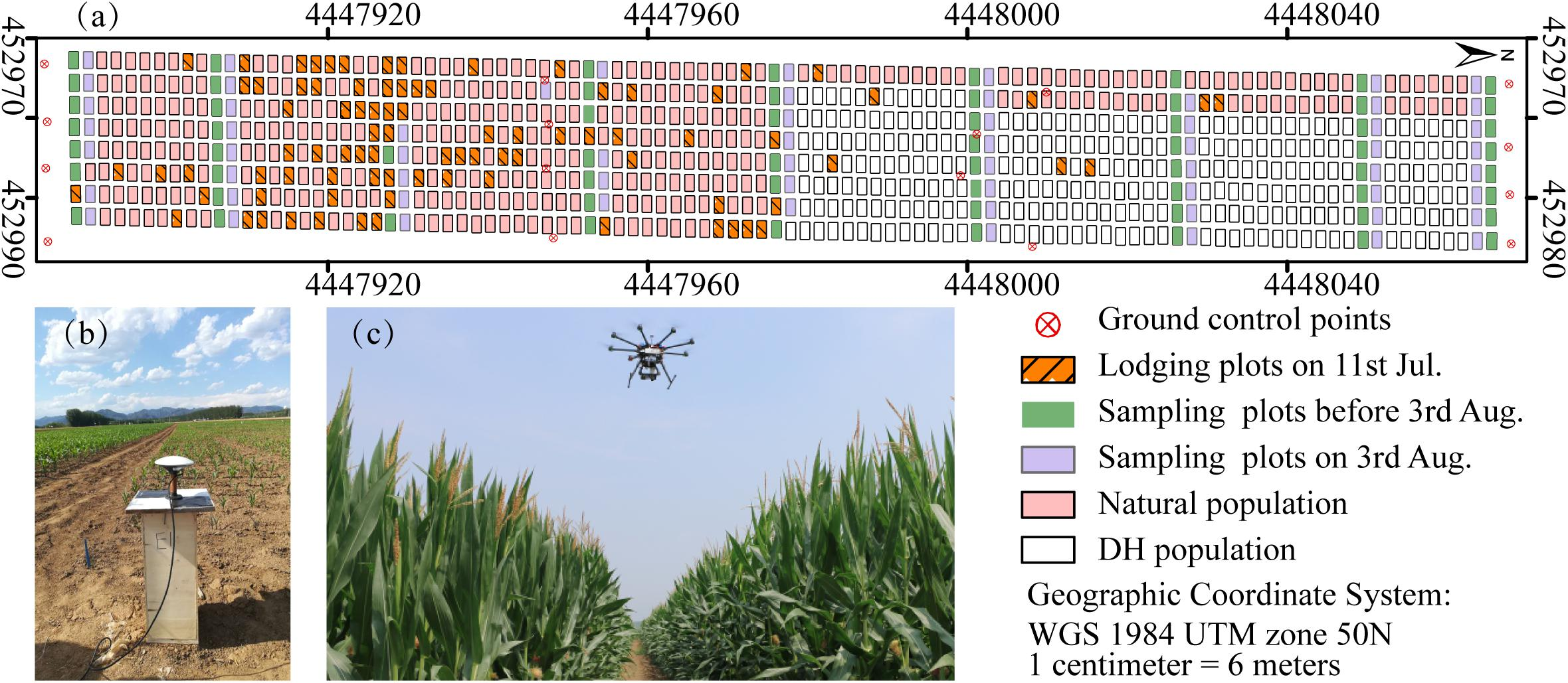 Frontiers | Fuzzy Clustering of Maize Plant-Height Patterns Using