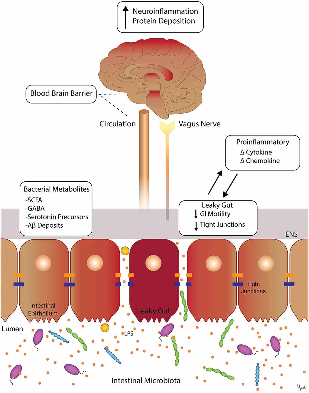 high fat diet dopamine colon