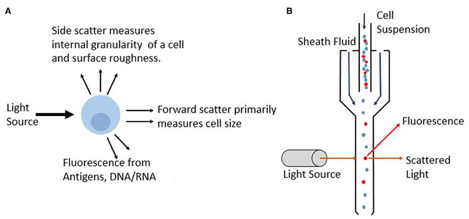 Frontiers | Cell Cytometry: Review and Perspective on