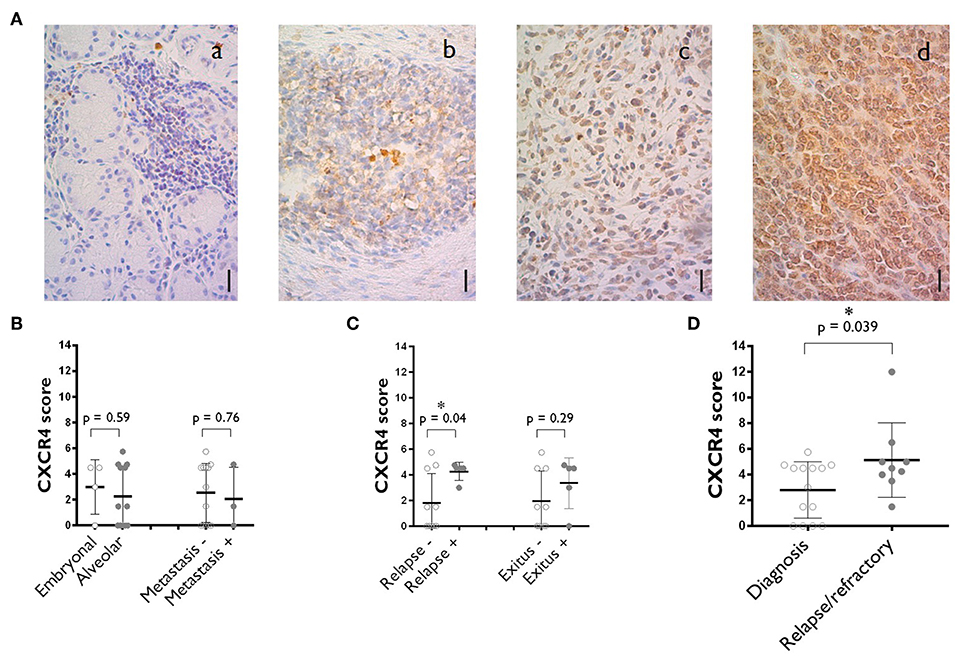 Frontiers   Anti-CXCR4 Antibody Combined With Activated and