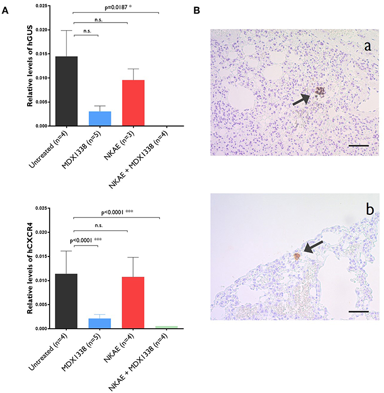 Frontiers | Anti-CXCR4 Antibody Combined With Activated and