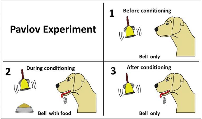 Figure 1 - Pavlov's experiment.