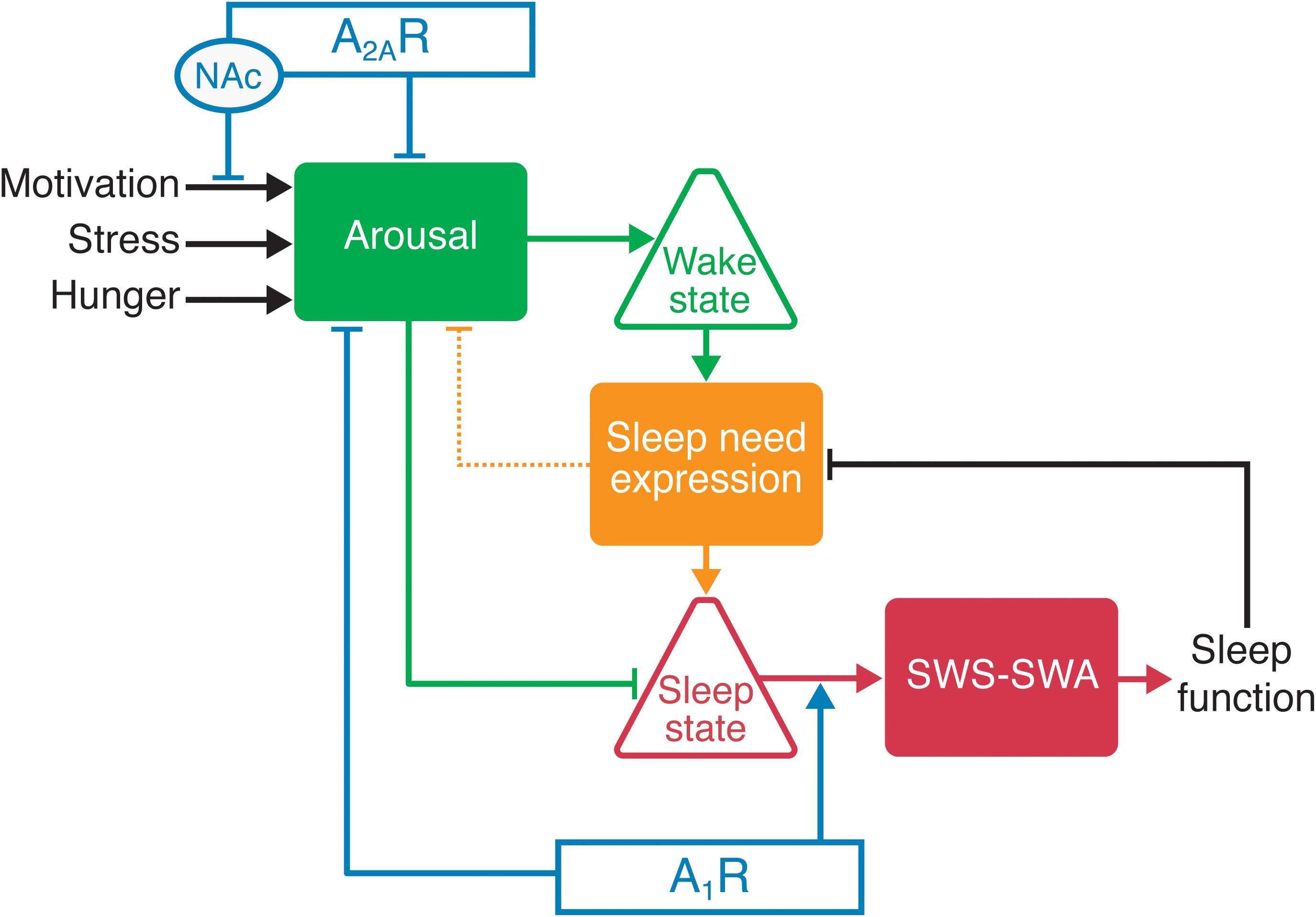 Frontiers | Gating and the Need for Sleep: Dissociable Effects of
