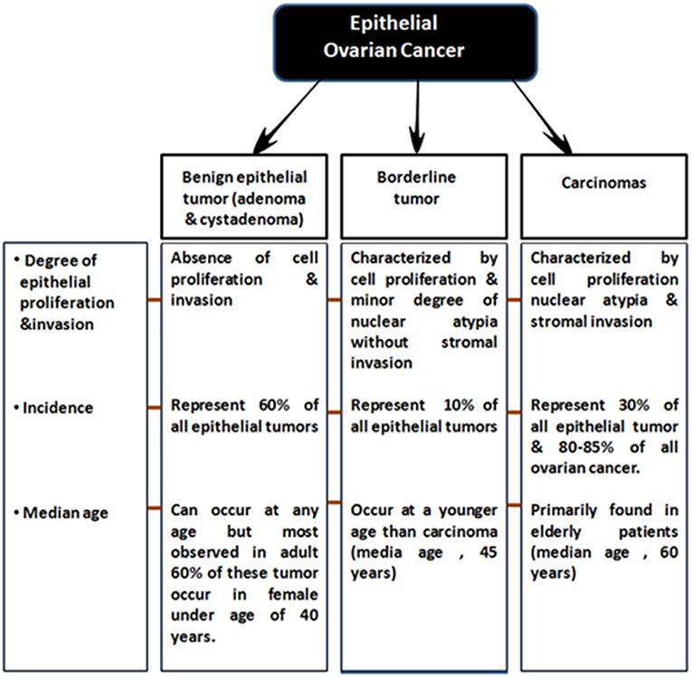 Frontiers Epigenetic Biomarkers In The Management Of Ovarian Cancer Current Prospectives Cell And Developmental Biology