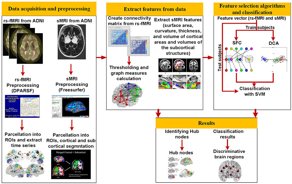 Frontiers | Identification of the Early Stage of Alzheimer's