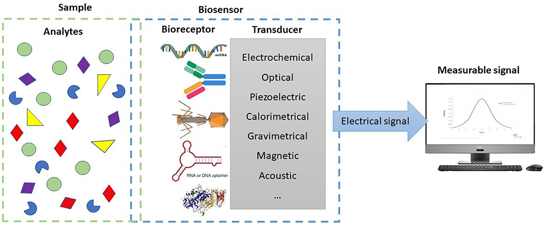 Frontiers | Biosensors for On-Farm Diagnosis of Mastitis