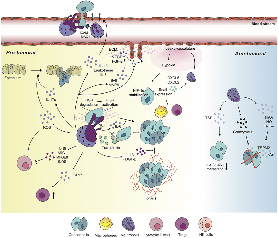 Frontiers | Context Drives Diversification of Monocytes and