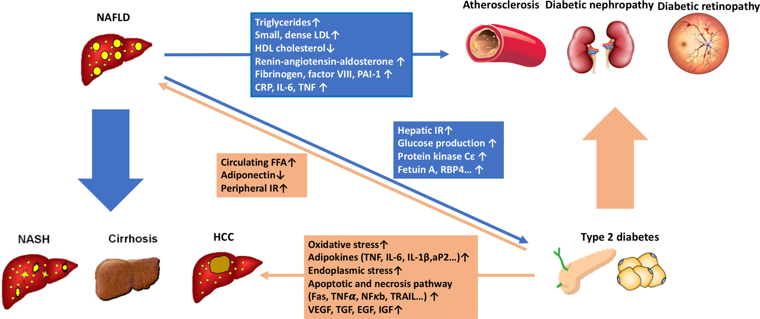 can a nondiabetic diet cause fatty liver