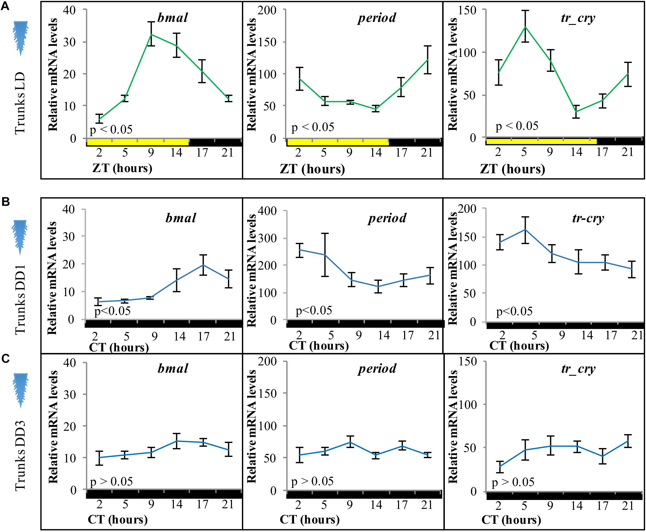 Frontiers | Differential Impacts of the Head on Platynereis