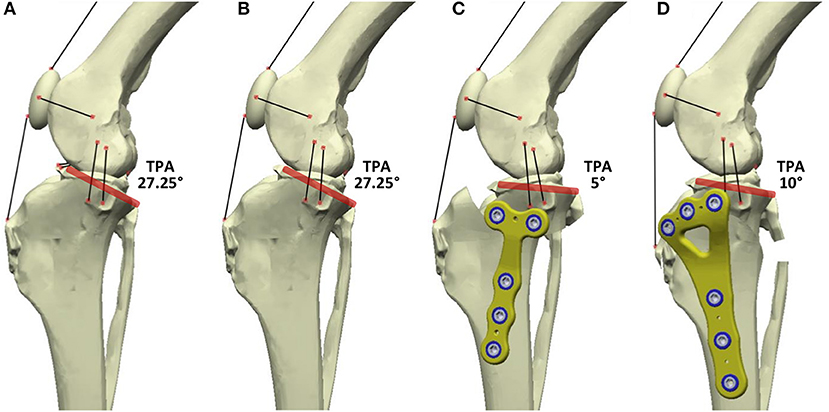 Frontiers | Surgical Treatments for Canine Anterior Cruciate