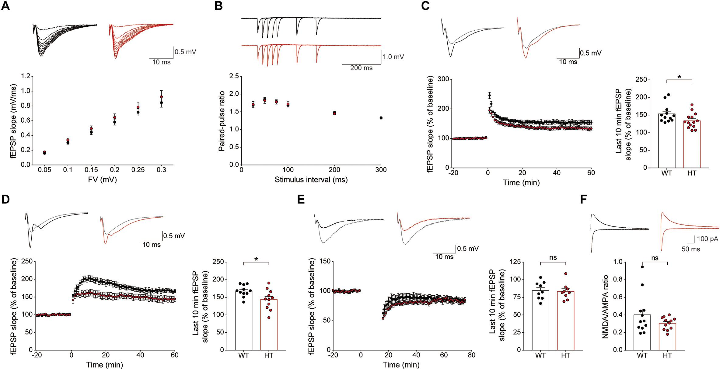 Frontiers | Scn2a Haploinsufficiency in Mice Suppresses Hippocampal