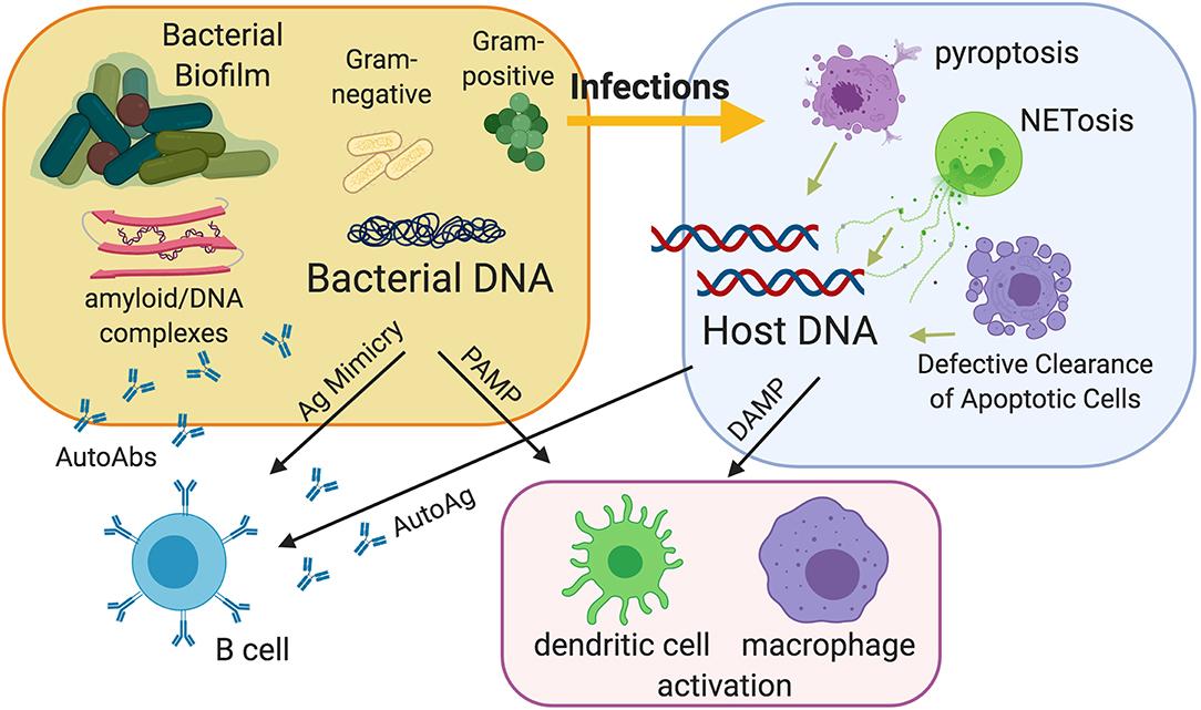 Gardasil vaccine and autoimmune disease Hpv autoimmune disease