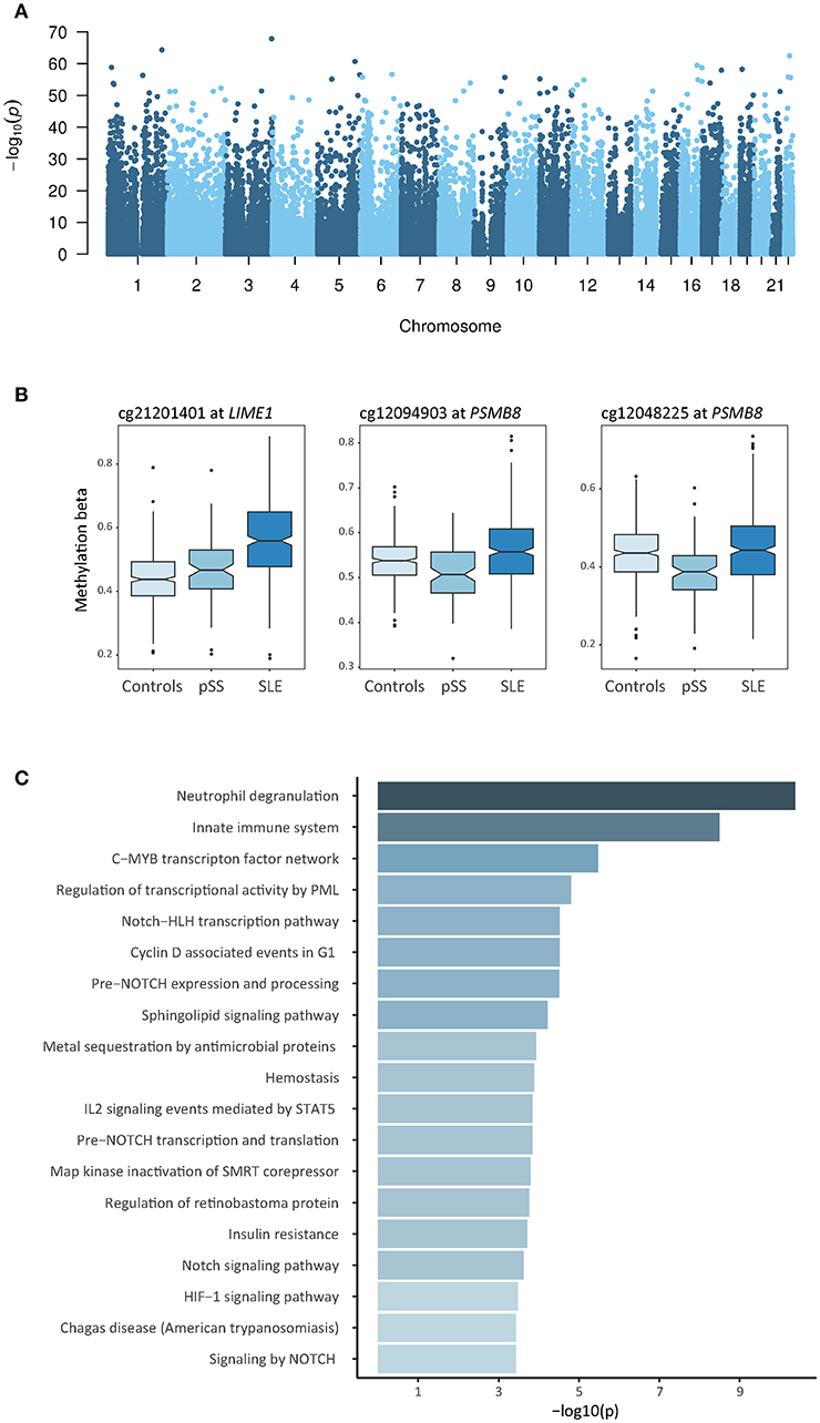 Frontiers | Shared and Unique Patterns of DNA Methylation in