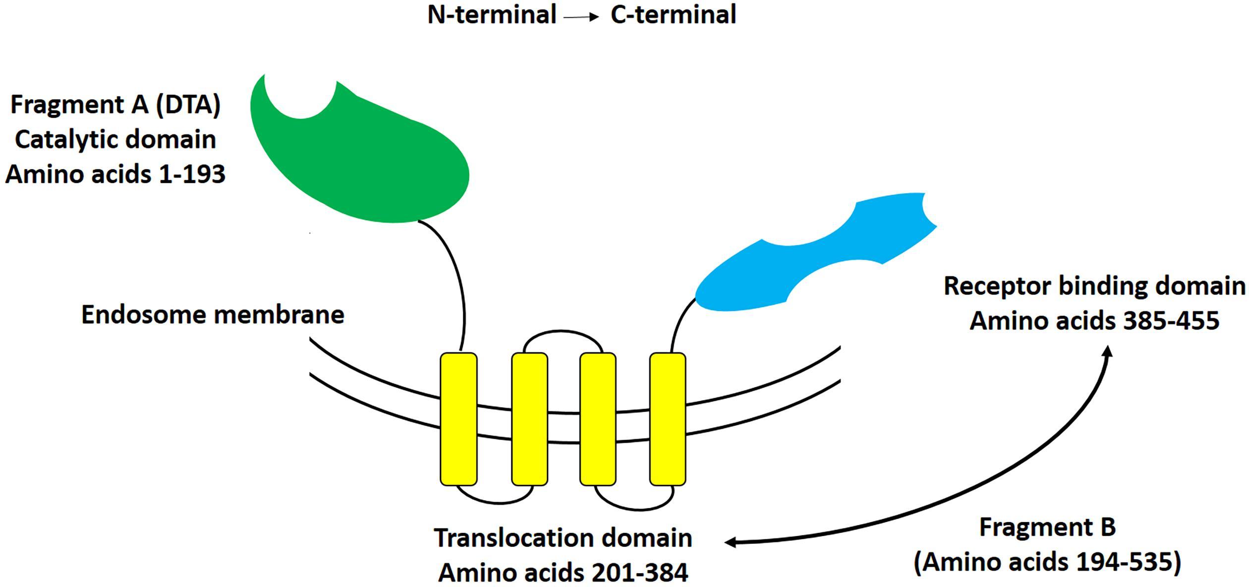 Clostridioides (Clostridium) difficile vizsgálat