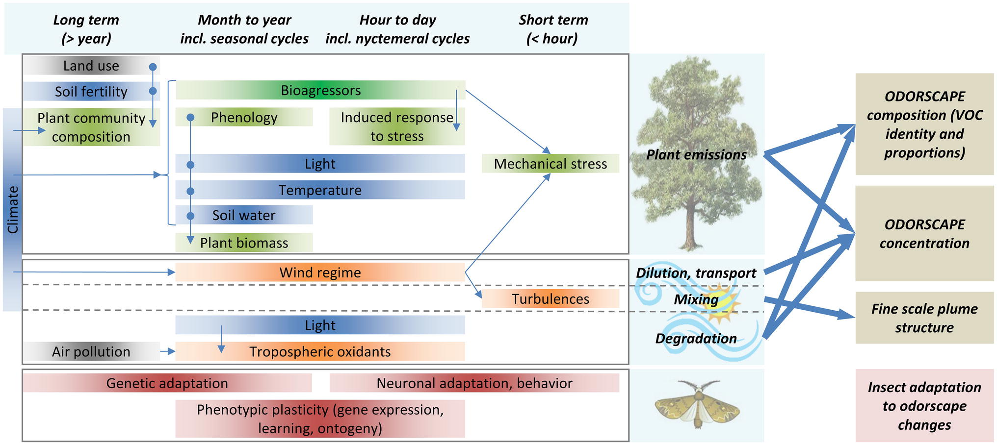 Frontiers | Insect Odorscapes: From Plant Volatiles to