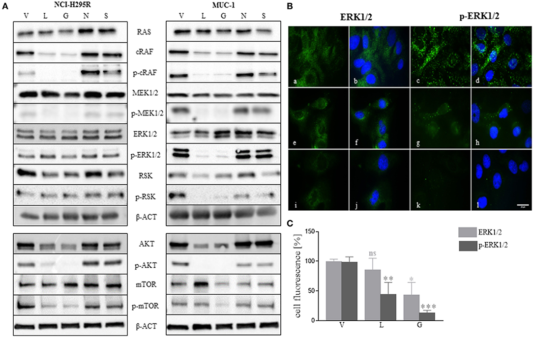 Frontiers | Heat Shock Protein 90 as a Prognostic Marker and