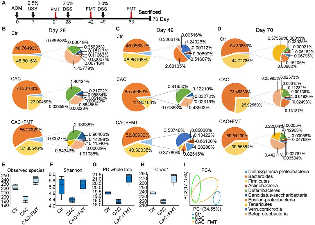 Frontiers Protective Role Of Fecal Microbiota Transplantation On Colitis And Colitis Associated Colon Cancer In Mice Is Associated With Treg Cells Microbiology
