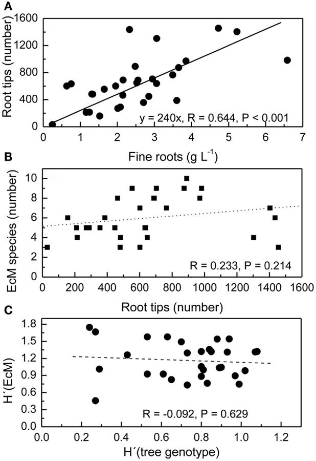 ectomycorrhizal relationship tips