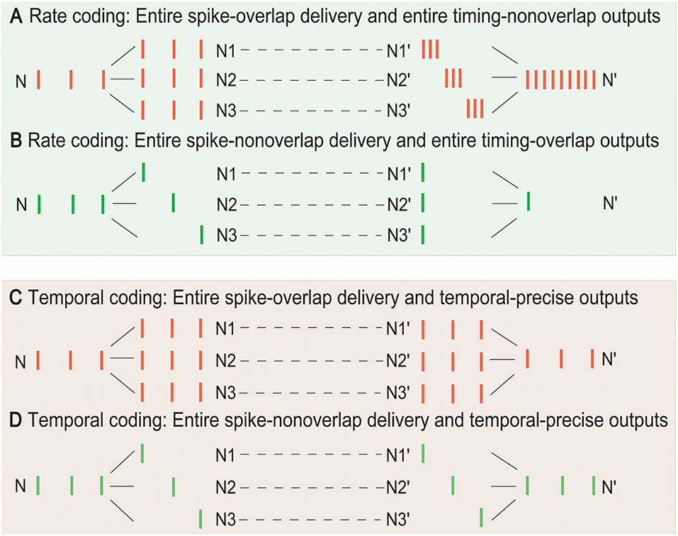 Frontiers | Cellular and Network Mechanisms for Temporal