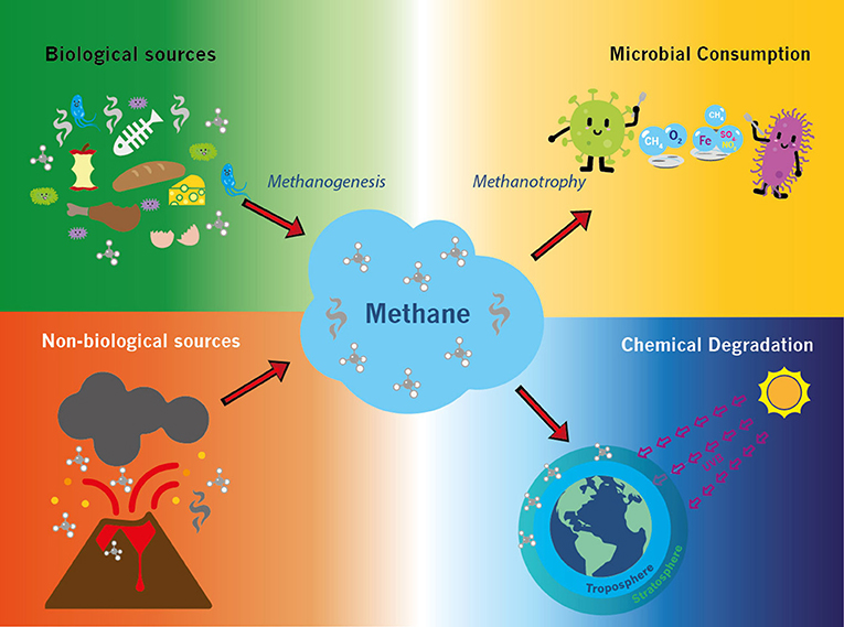 Figure 1 - Diagram of the methane cycle showing sources of methane production and methane breakdown on Earth.