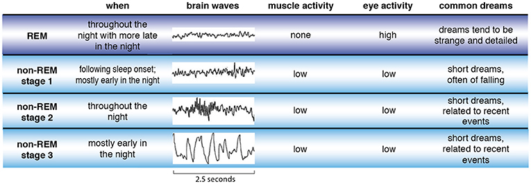 Figure 2 - There are four types of sleep—REM sleep (purple) and three stages of non-REM sleep (blue).