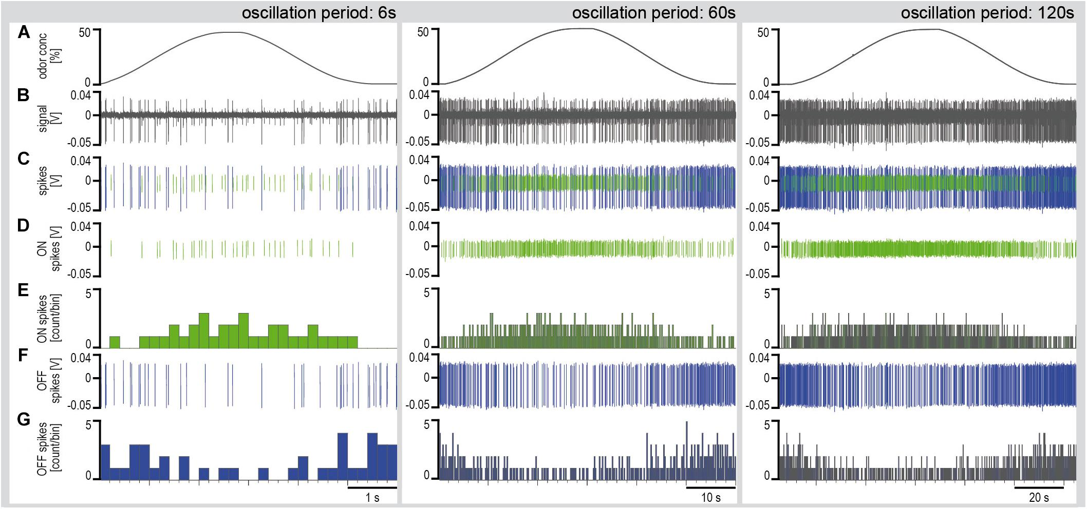 Frontiers | Encoding of Slowly Fluctuating Concentration