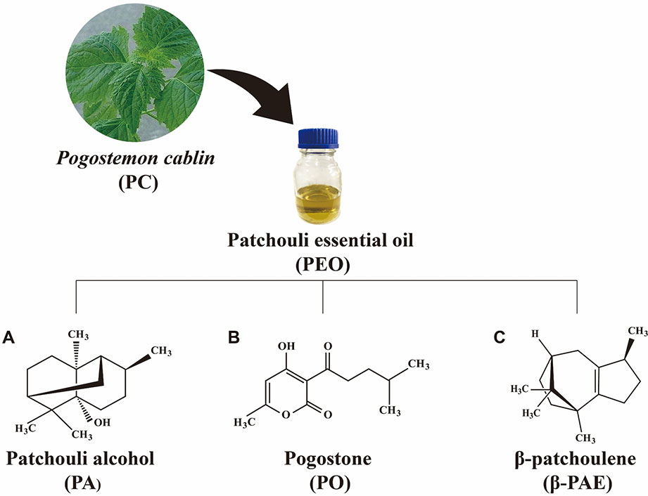 Frontiers Patchouli Essential Oil And Its Derived Compounds Revealed Prebiotic Like Effects In C57bl 6j Mice Pharmacology