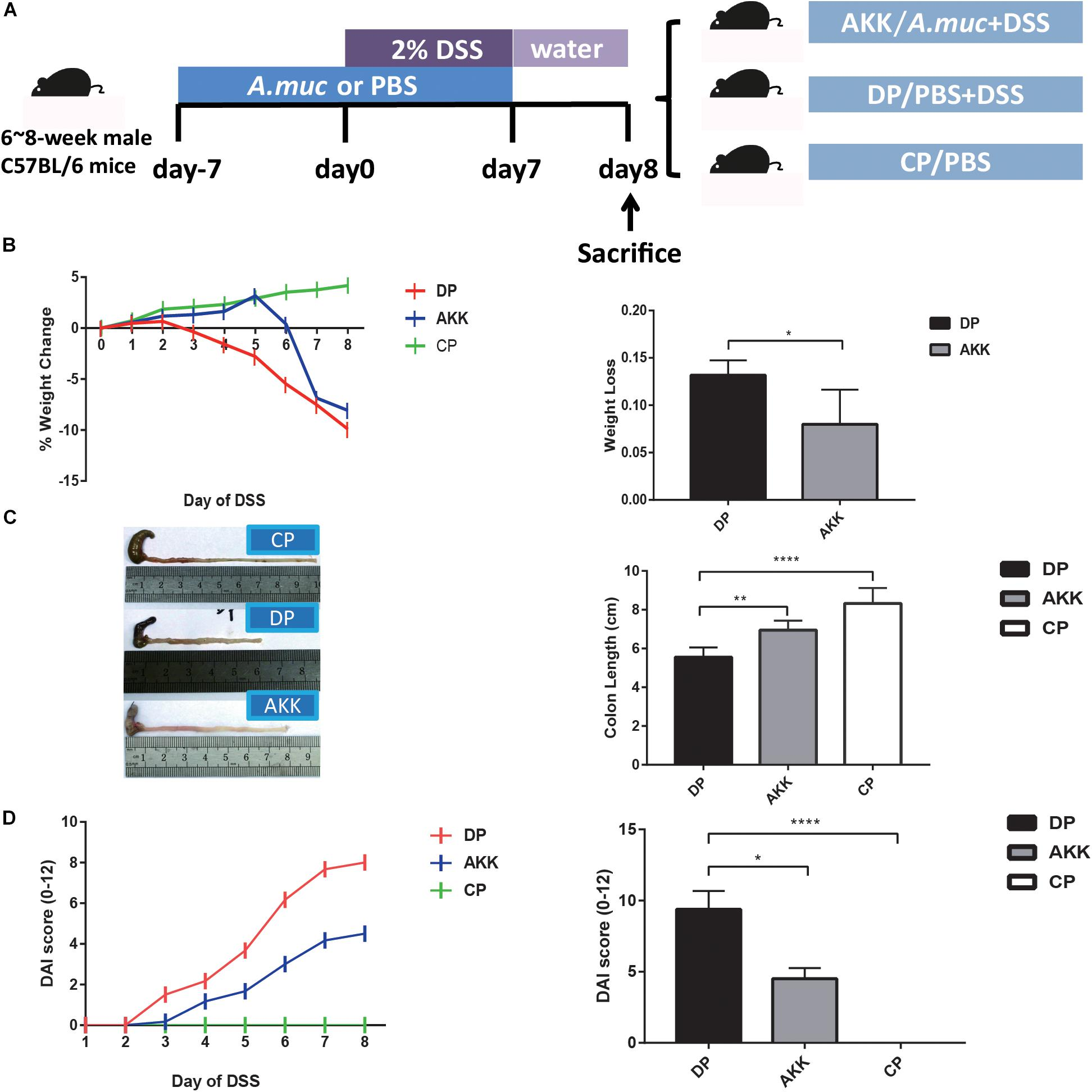 Frontiers Administration Of Akkermansia Muciniphila Ameliorates Dextran Sulfate Sodium Induced Ulcerative Colitis In Mice Microbiology