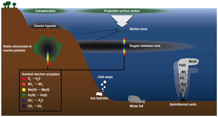 Frontiers The Microbiology Of Deep Sea Hydrothermal Vent