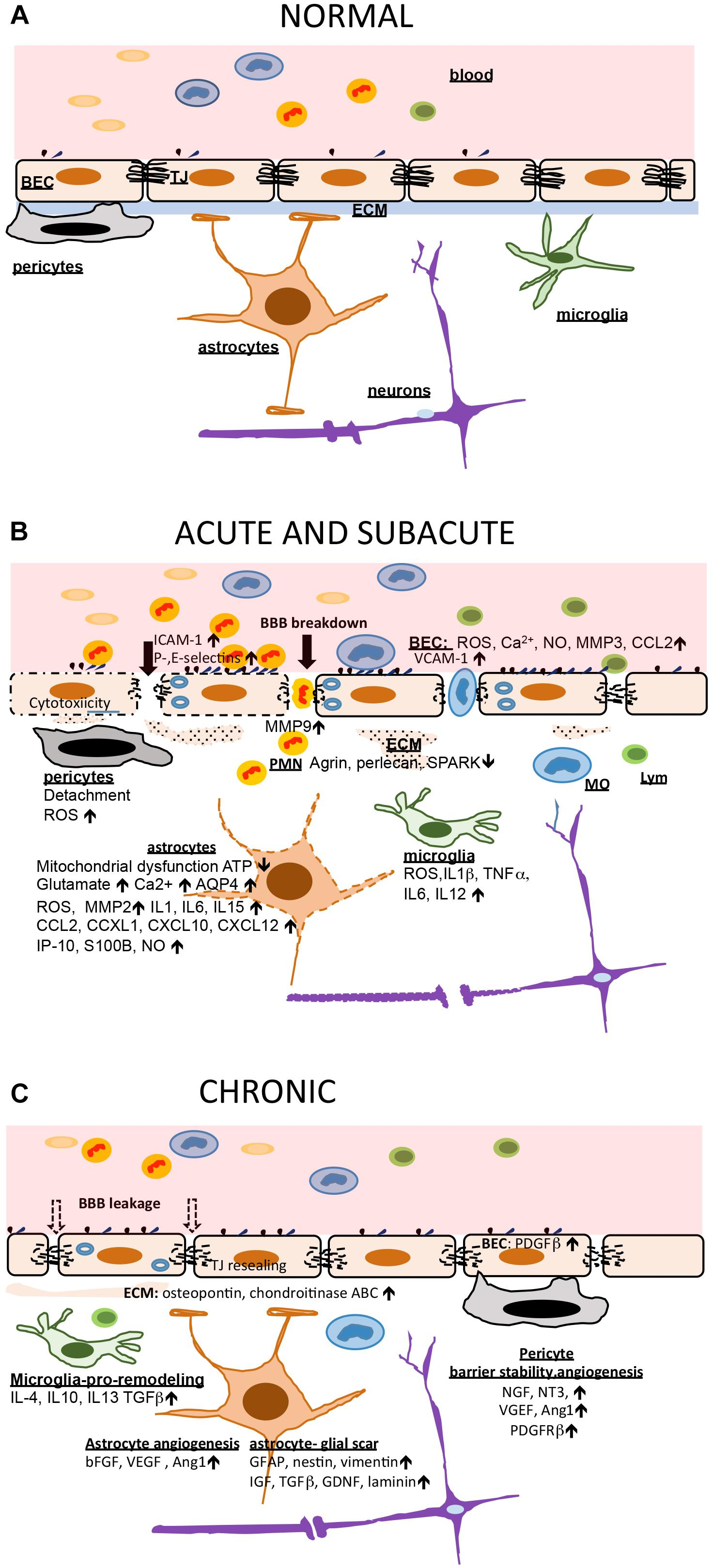 Frontiers | Involvement of Epigenetic Mechanisms and Non