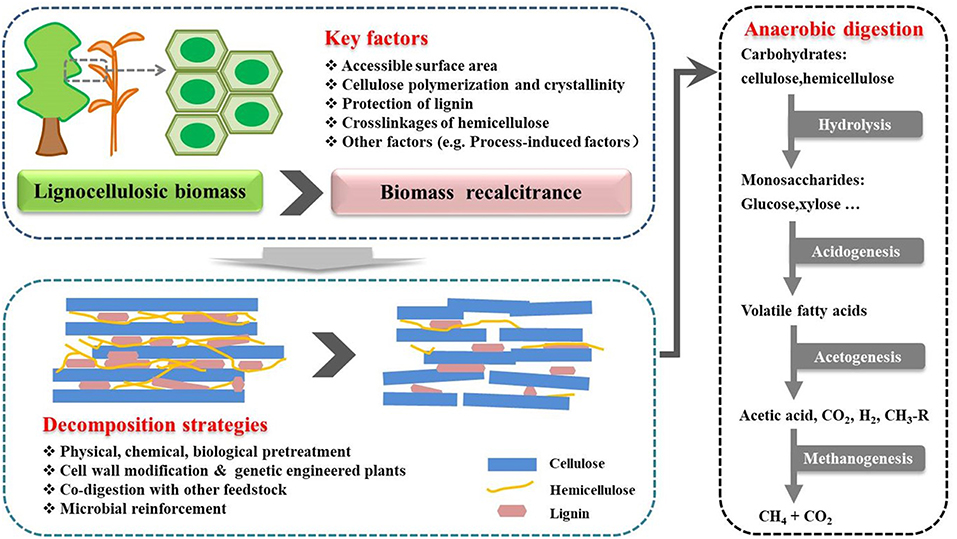 Frontiers | Biomethane Production From Lignocellulose