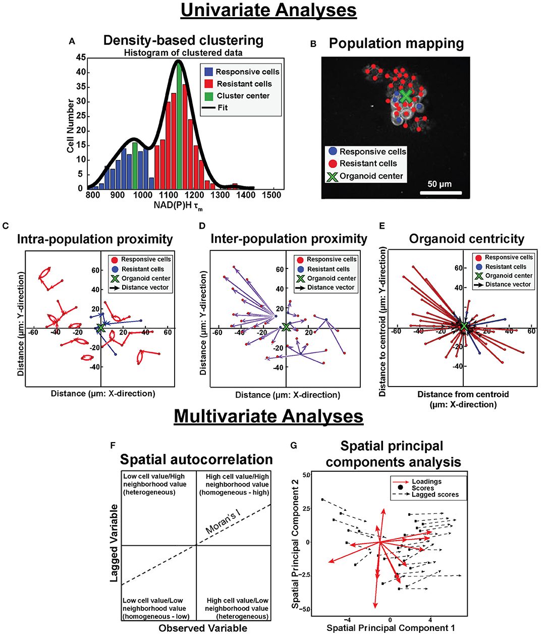 Frontiers   Quantitative Spatial Analysis of Metabolic