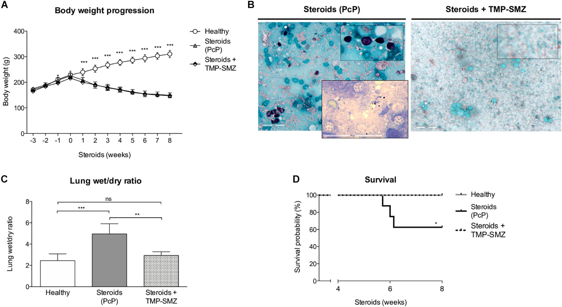 Frontiers | Niflumic Acid Reverses Airway Mucus Excess and