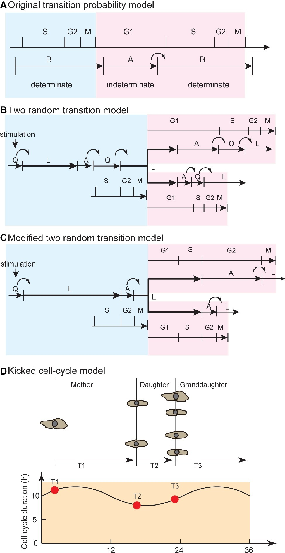Frontiers | Quantitative Studies for Cell-Division Cycle