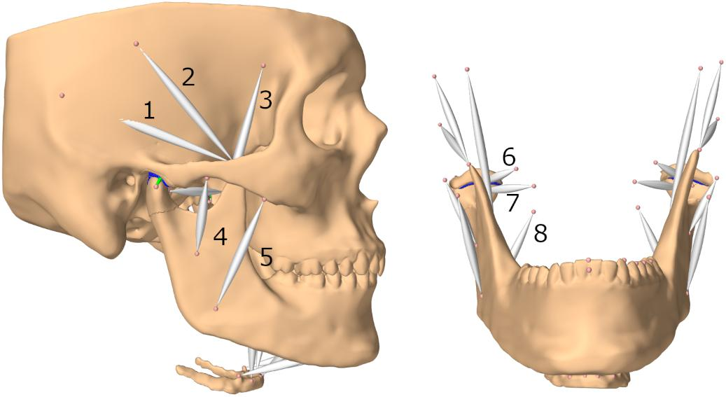Posture of mandible definition of