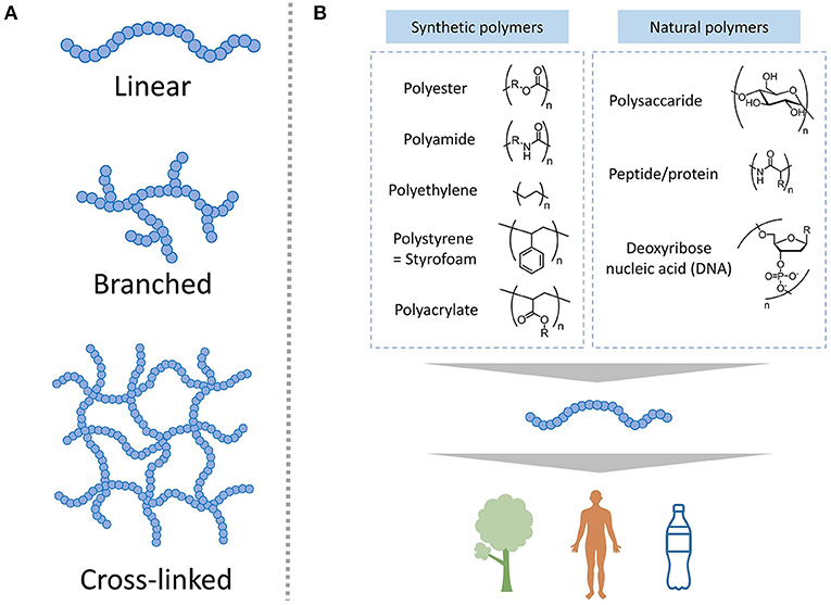 Figure 2 - (A) Polymers can have three different structures: linear, branched, and cross-linked.