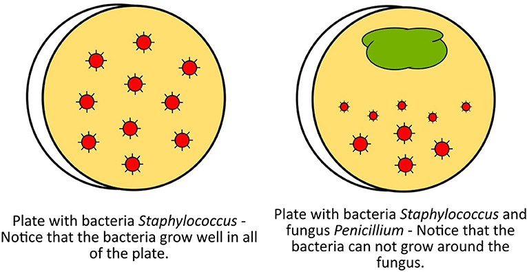 Figure 1 - Representation of the culture plates observed by Alexander Fleming that helped him to discover the first antibiotic, penicillin.