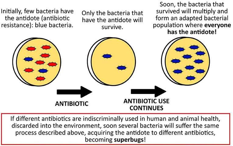 Figure 2 - How bacteria can become resistant to an antibiotic and turn into superbugs.