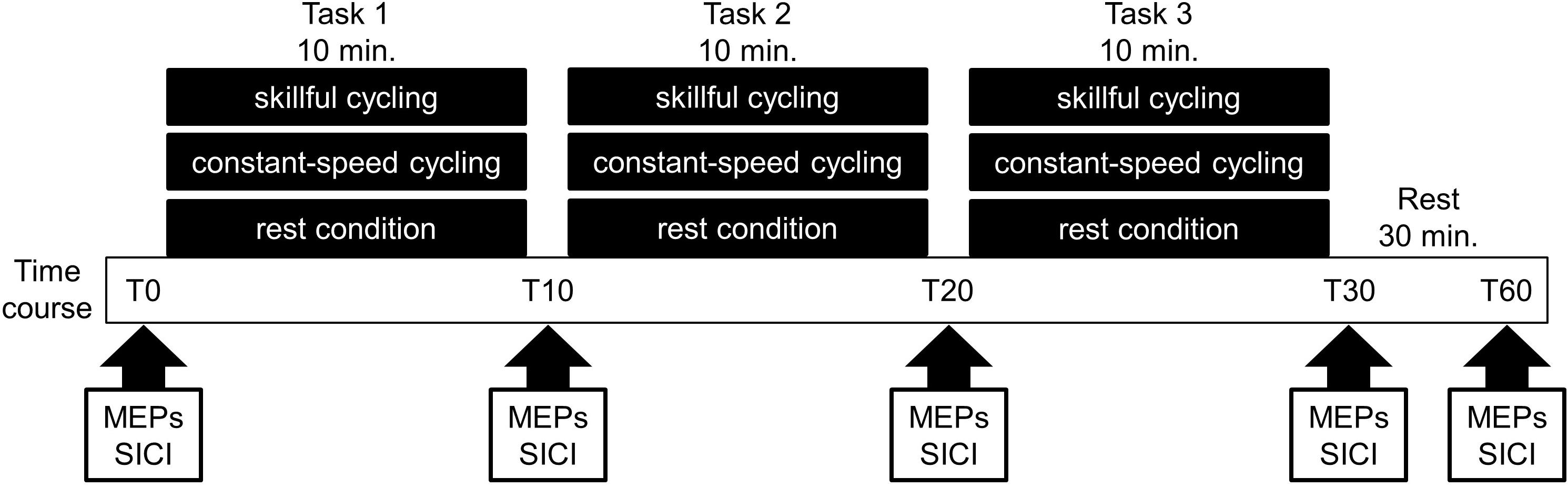 Frontiers | Skillful Cycling Training Induces Cortical