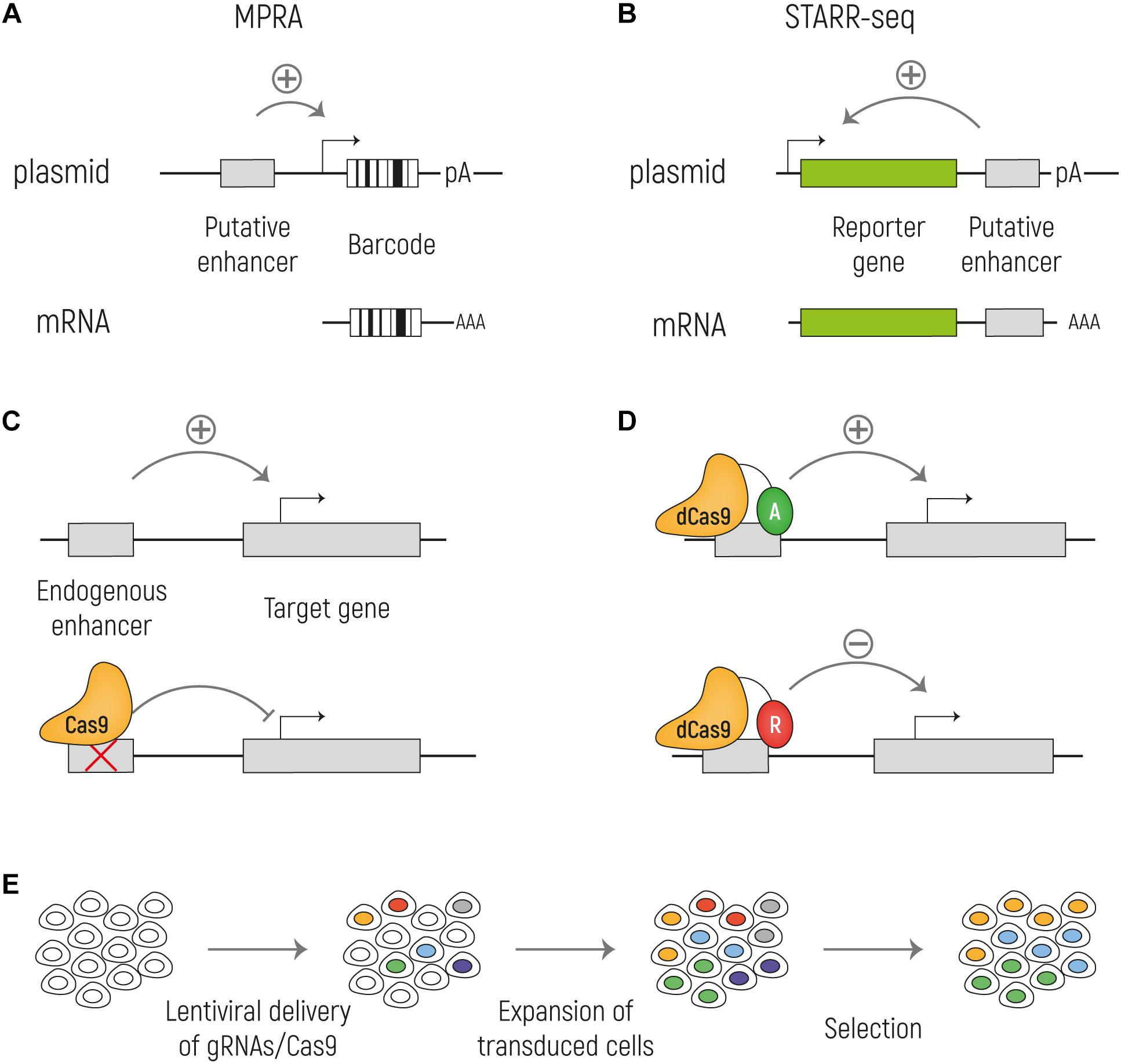 Frontiers | Beyond the Exome: The Non-coding Genome and