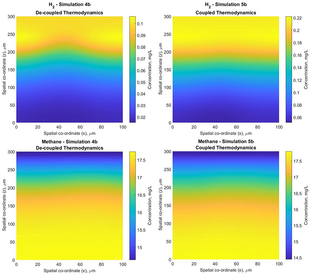 Frontiers | Individual Based Model Links Thermodynamics