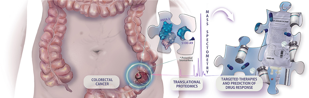 Frontiers Biomarkers In Colorectal Cancer The Role Of Translational Proteomics Research Oncology