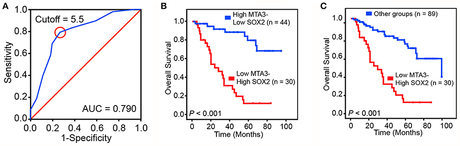 Frontiers | MTA3-SOX2 Module Regulates Cancer Stemness and