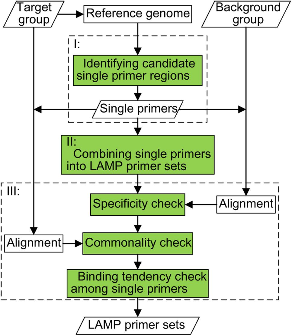 Frontiers Glapd Whole Genome Based Lamp Primer Design For A Set Of Target Genomes Microbiology