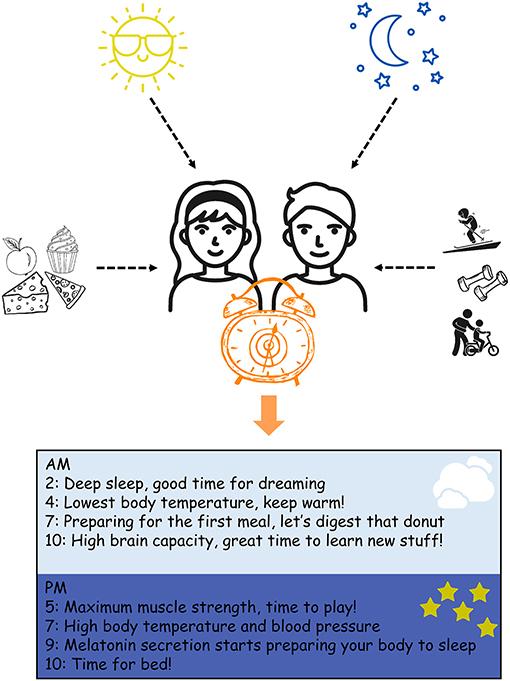 Figure 1 - Your Body Clock.