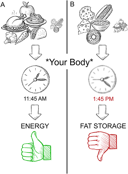 Figure 2 - The food you eat can change your body clock's time.