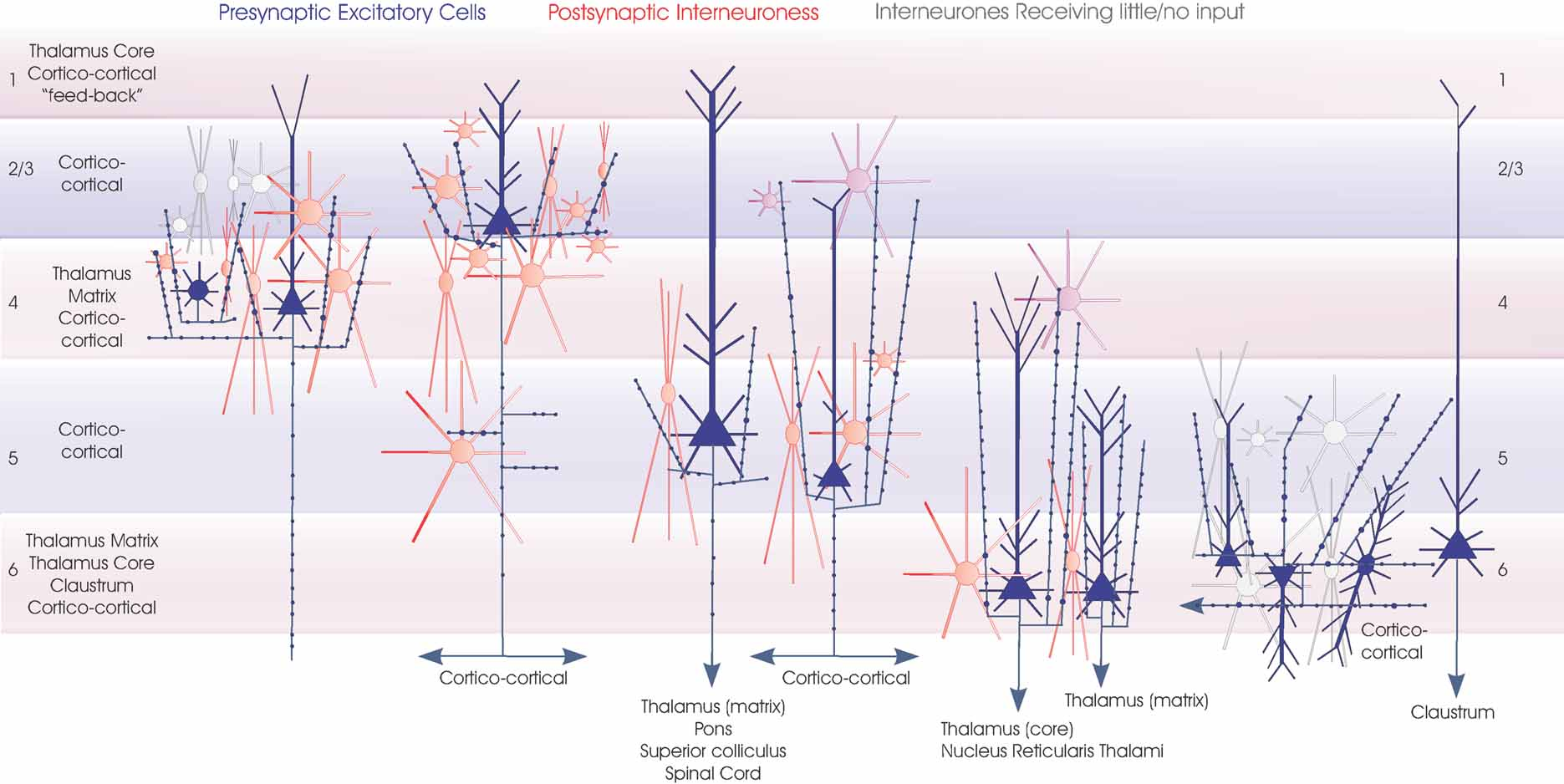 Frontiers Functional Maps Of Neocortical Local Circuitry Conde Electric Motor Wiring Diagram
