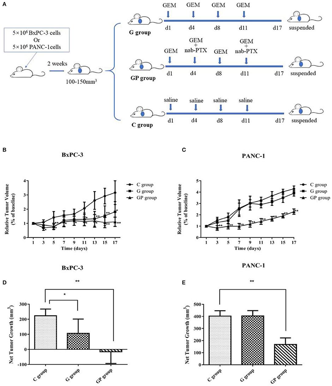 pancreatic cancer xenograft gemcitabine