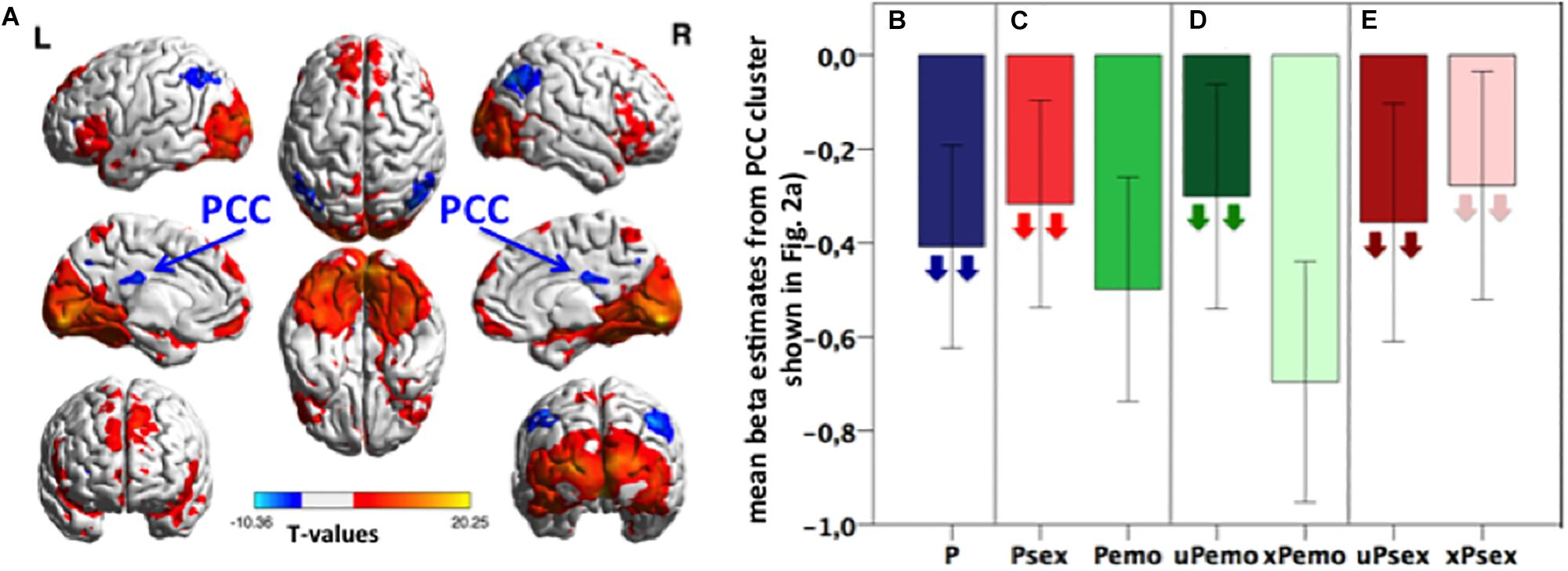 Frontiers | Glutamate in Salience Network Predicts BOLD ...
