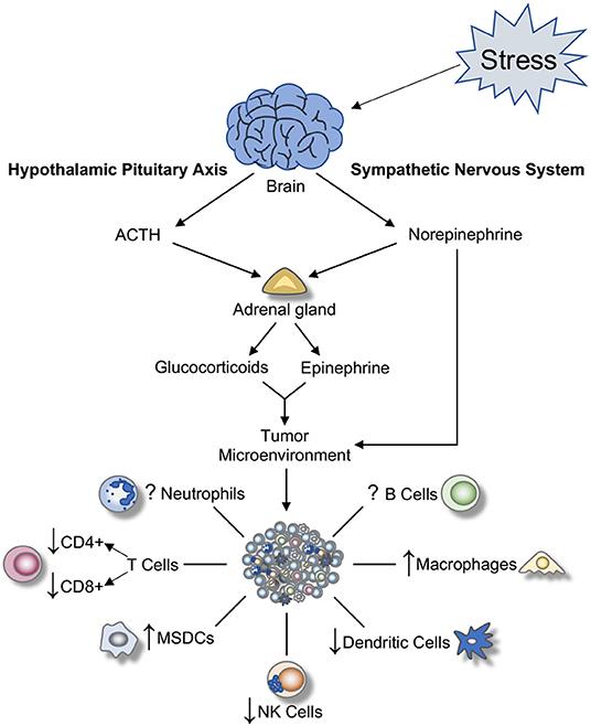 Cancer colorectal non-polipozic ereditar tip 5 (HNPCC) - mutații MSH6 - Synevo